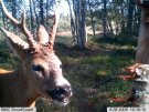 Wildlife Research Center Buck-Nip