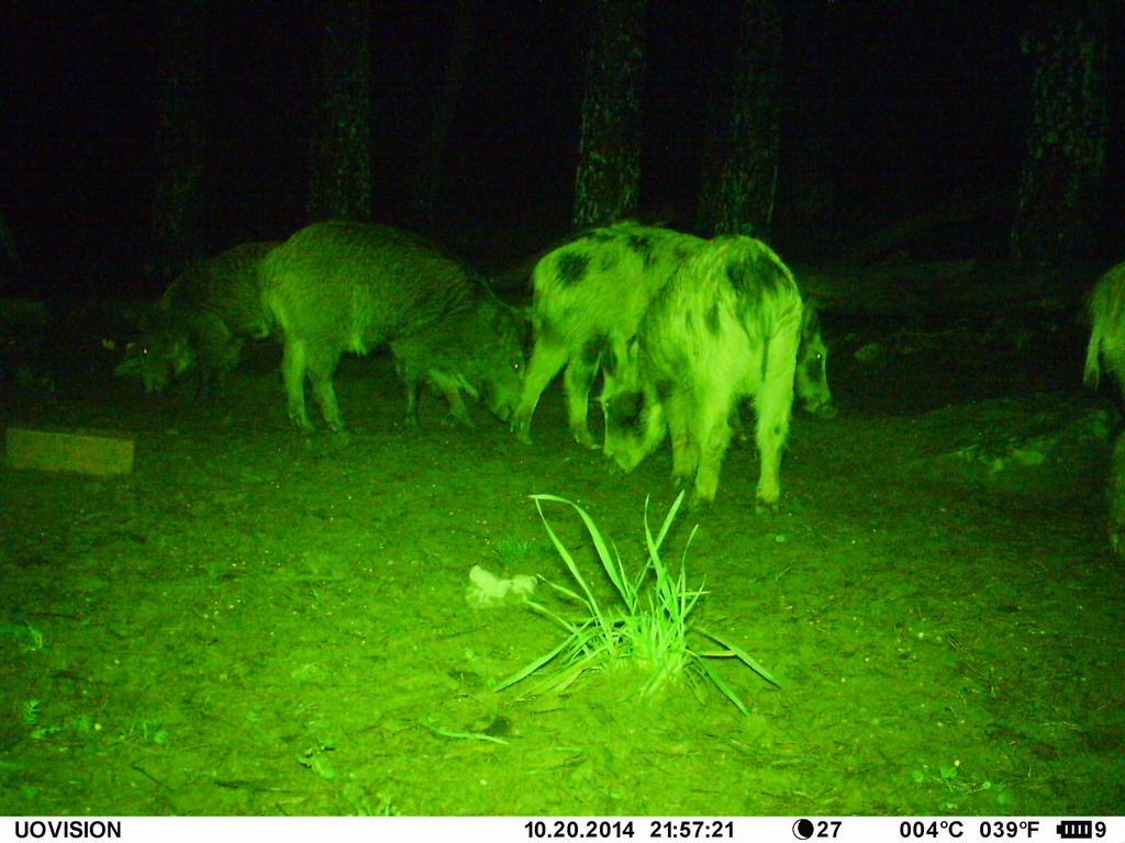 grön laser till jakt